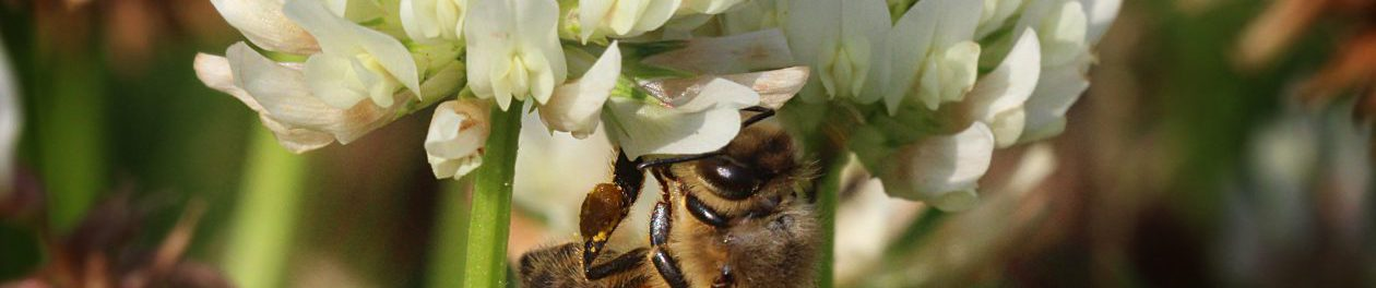 Biavlerforeningen